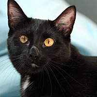 Adopt A Pet :: Bubba the Luvva - St. Louis, MO