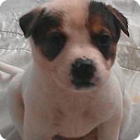 Adopt A Pet :: Jiminy Cricket - fairy tale - Phoenix, AZ