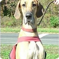 Adopt A Pet :: Dakota - Boonton, NJ