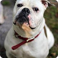 Adopt A Pet :: Sugar - Tinton Falls, NJ
