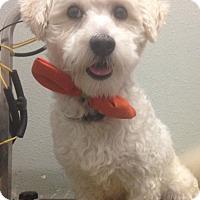 Adopt A Pet :: Clifford - South Gate, CA