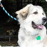 Adopt A Pet :: Buddy - Indian Trail, NC