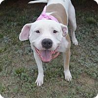 Adopt A Pet :: Bianca - Aurora, CO
