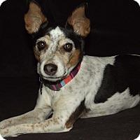 Adopt A Pet :: Esmerelda - Phoenix, AZ