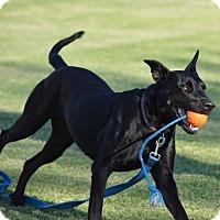 Adopt A Pet :: Sophie - Phoenix, AZ