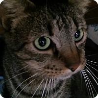 Adopt A Pet :: Forest - Witter, AR