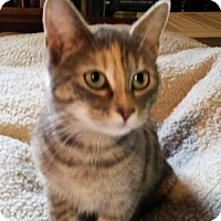 Adopt A Pet :: Artemis YOUNG Adult FEMALE - Morehead, KY