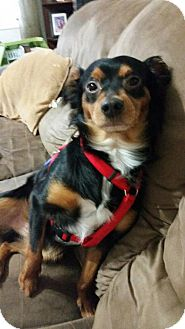 Border Collie Mix Dog for adoption in Key Largo, Florida - Snickers