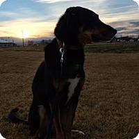 Adopt A Pet :: Obie - Greeley, CO