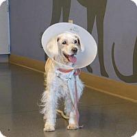 Adopt A Pet :: Mandy O - Parker, CO