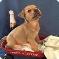 Adopt A Pet :: Cub - Tehachapi, CA
