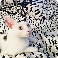 Adopt A Pet :: Bessie - Duluth, GA