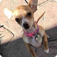 Adopt A Pet :: Zeke - Logan, UT