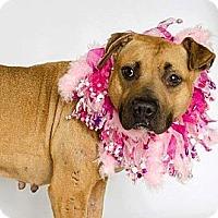 Adopt A Pet :: Izzabella - Orlando, FL