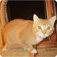 Adopt A Pet :: Durango (prefers men) - Sterling Hgts, MI