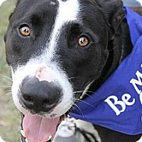 Adopt A Pet :: Highway - Baton Rouge, LA
