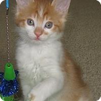 Adopt A Pet :: Corduroy - North Highlands, CA