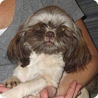 Adopt A Pet :: Maggie - Greenville, RI