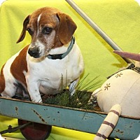 Adopt A Pet :: Rudy - Ripley, WV