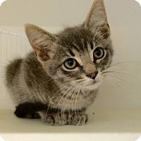Adopt A Pet :: Samsung (& Bonbon) - Arlington, VA