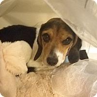Adopt A Pet :: Hope - Cincinnati, OH