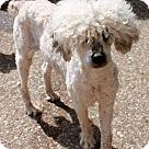 Adopt A Pet :: Trevor