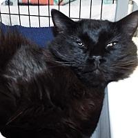 Adopt A Pet :: Sage - Grants Pass, OR