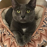Adopt A Pet :: Cinderbella - Romeoville, IL