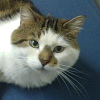 Adopt A Pet :: Jera - Toronto, ON