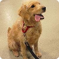 Adopt A Pet :: Daisy - Santa Ana, CA