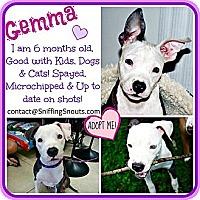 Adopt A Pet :: Gemma - Orlando, FL