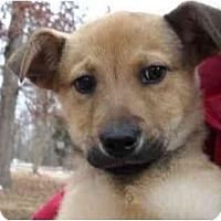 Adopt A Pet :: Sasha - Braintree, MA
