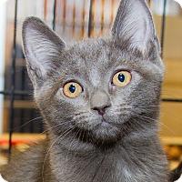 Adopt A Pet :: Alison - Irvine, CA
