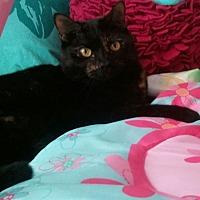 Adopt A Pet :: Darcy - Sarasota, FL