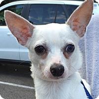 Adopt A Pet :: Reed - geneva, FL