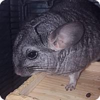 Adopt A Pet :: Flora - Patchogue, NY