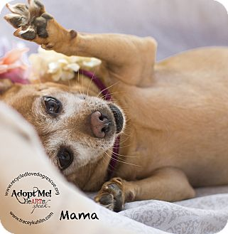 Dachshund/Chihuahua Mix Dog for adoption in Inland Empire, California - MaMa