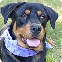 Adopt A Pet :: Merida - Mocksville, NC
