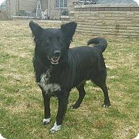 Adopt A Pet :: Hank - Naperville, IL