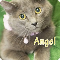 Adopt A Pet :: Angel - Adoption Pending - Fort Worth, TX