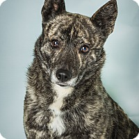Adopt A Pet :: Nala - Hendersonville, NC