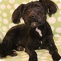 Adopt A Pet :: Oliver - Wytheville, VA