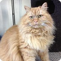 Adopt A Pet :: Isabella (beauty) - Sterling Hgts, MI