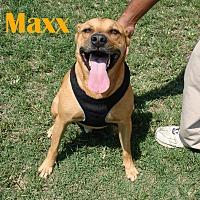 Adopt A Pet :: Maxx - Orangeburg, SC