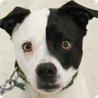 Terrier (Unknown Type, Medium) Mix Dog for adoption in Lexington, Kentucky - Spencer