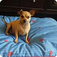 Adopt A Pet :: Lucy - Rancho Cucamonga, CA