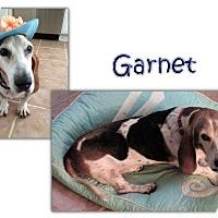 Adopt A Pet :: Garnet - Marietta, GA