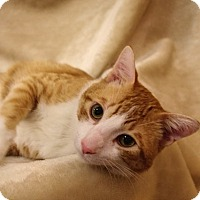 Adopt A Pet :: Edgar - Foothill Ranch, CA
