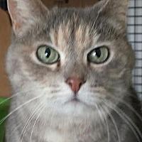 Adopt A Pet :: Wendy - Colfax, IA