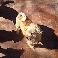 Adopt A Pet :: Traveler - Dothan, AL
